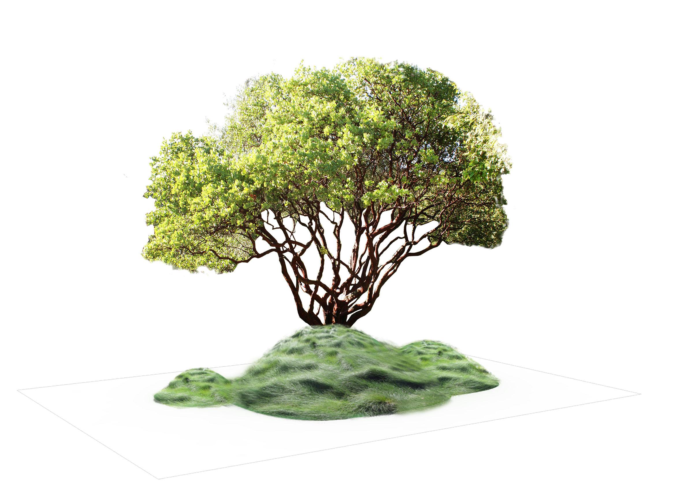 Woodland 1  Planting Scheme .jpg