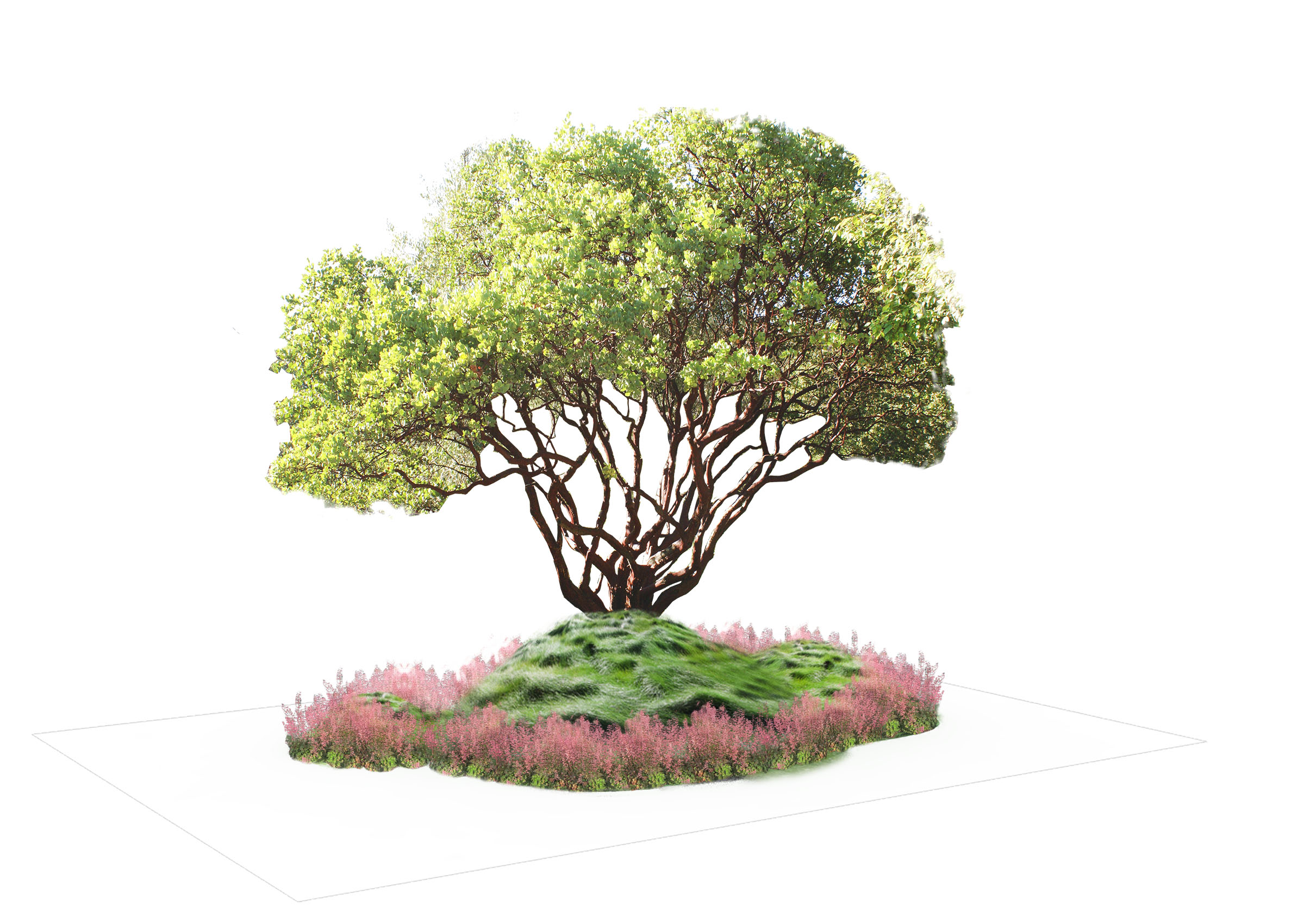Woodland 2  Planting Scheme .jpg