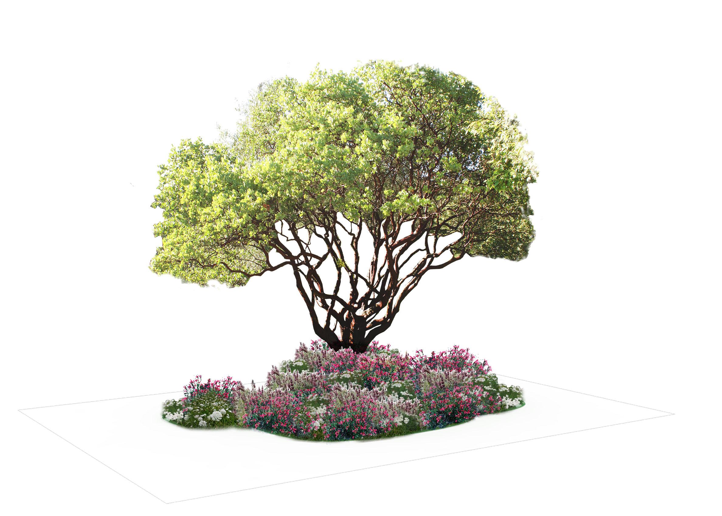Woodland 4 Planting Scheme  .jpg