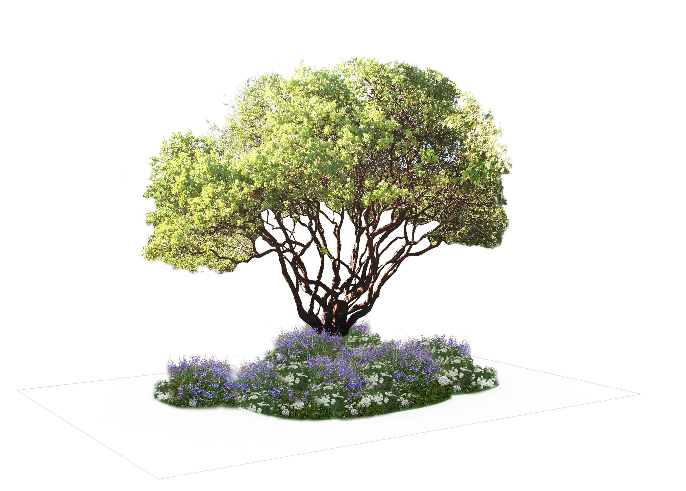 Woodland 4.1 Planting Scheme  .jpg