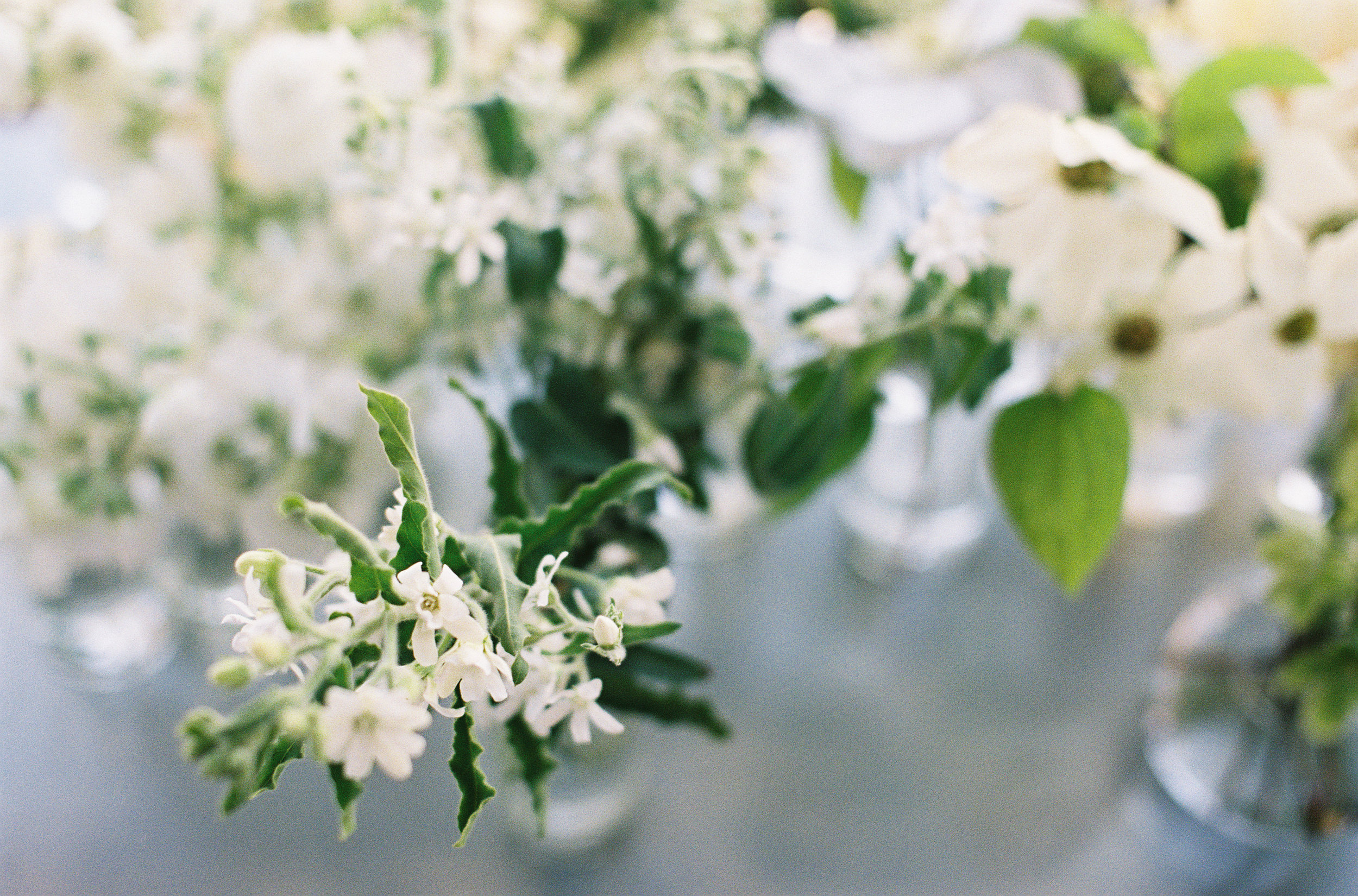 1. - Forage for branches and foliage in your garden or take cuttings from potted plants. Herbs, vines, garden roses and branches are all you need. If you'd rather shop for pre-cut flowers, choose jasmine, spray roses, hellebores, chamomile and eucalyptus for a similar look.