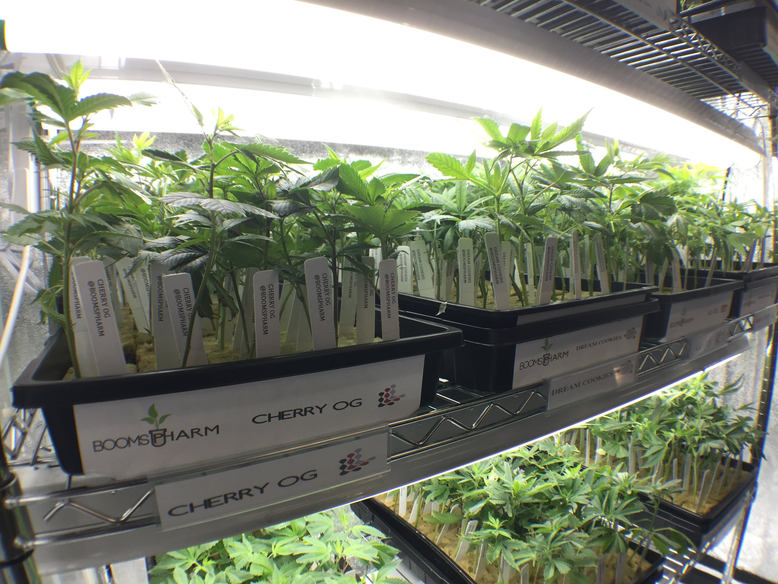 Clones Available