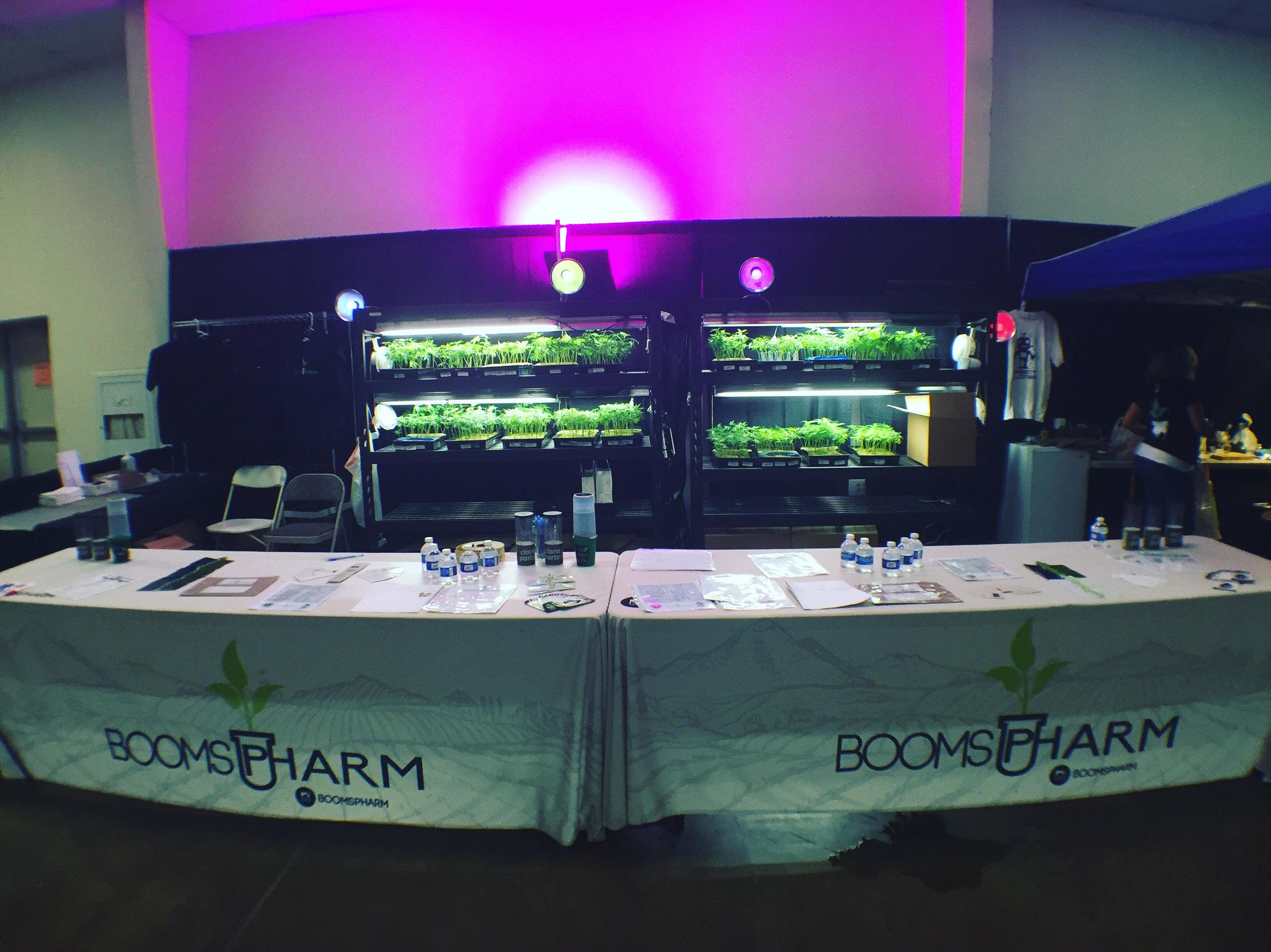 BoomsPharm Expo-1.jpg