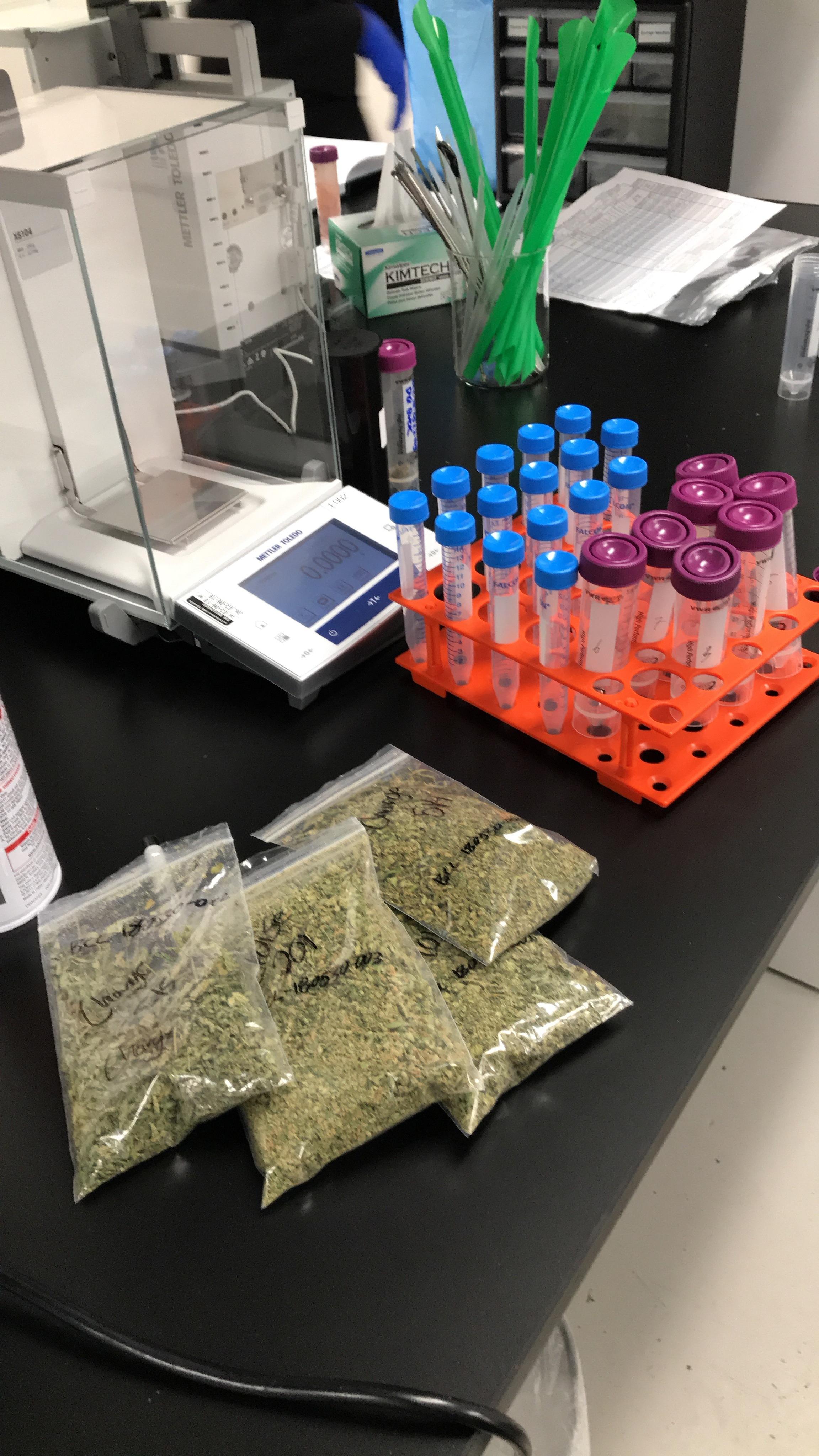 Lab Samples at Belcosta Labs in Long Beach, CA