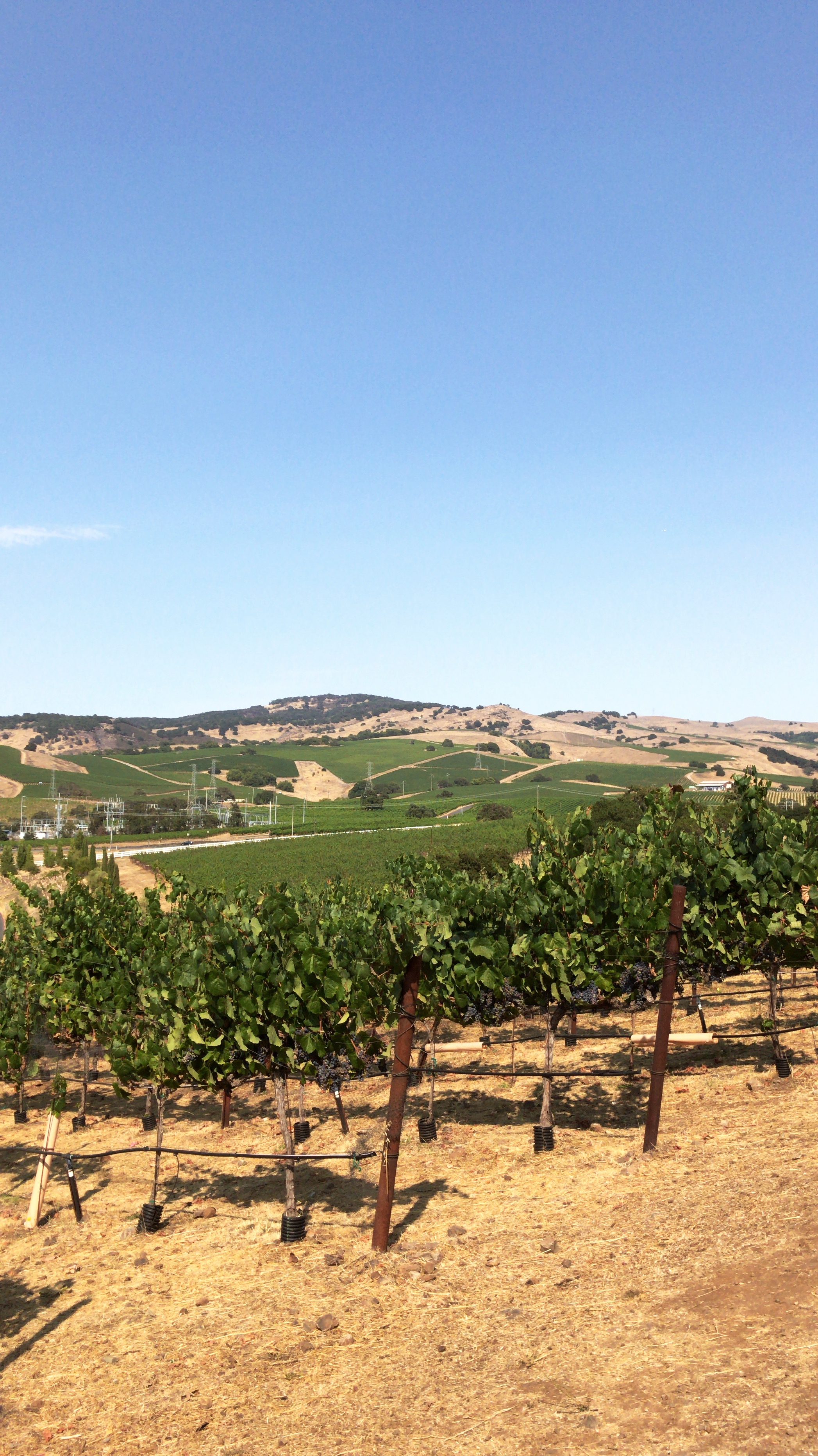 Rolling hillsides in Sonoma and Napa Valley filled with vineyards ready for wine tasting!