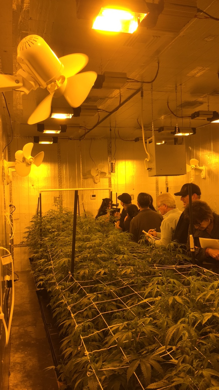 Students getting a tour of bloom room in licensed facility in CA