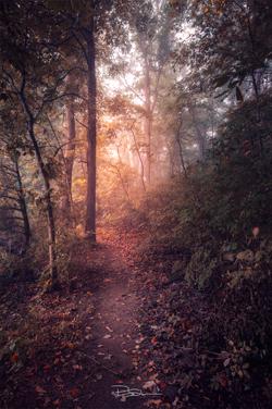 Finding Eden -