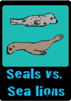 seals vs sea lions button.jpg