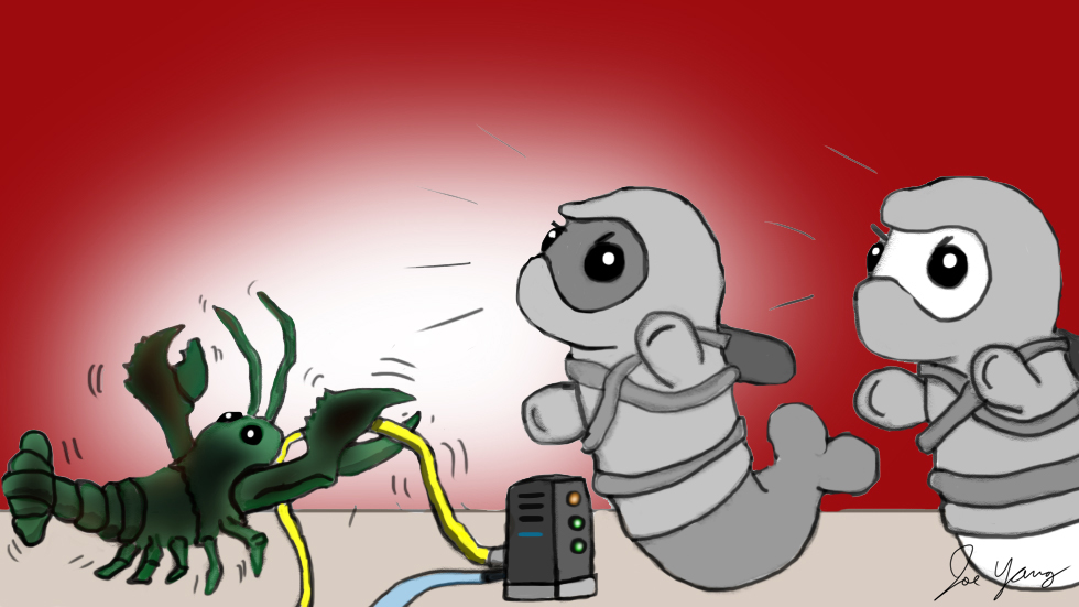 The Ninja Seals catch a lobster trying to destroy the internet!