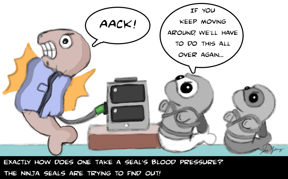 Exactly how does one take a seal's blood pressure? The Ninja Seals are trying to find out!