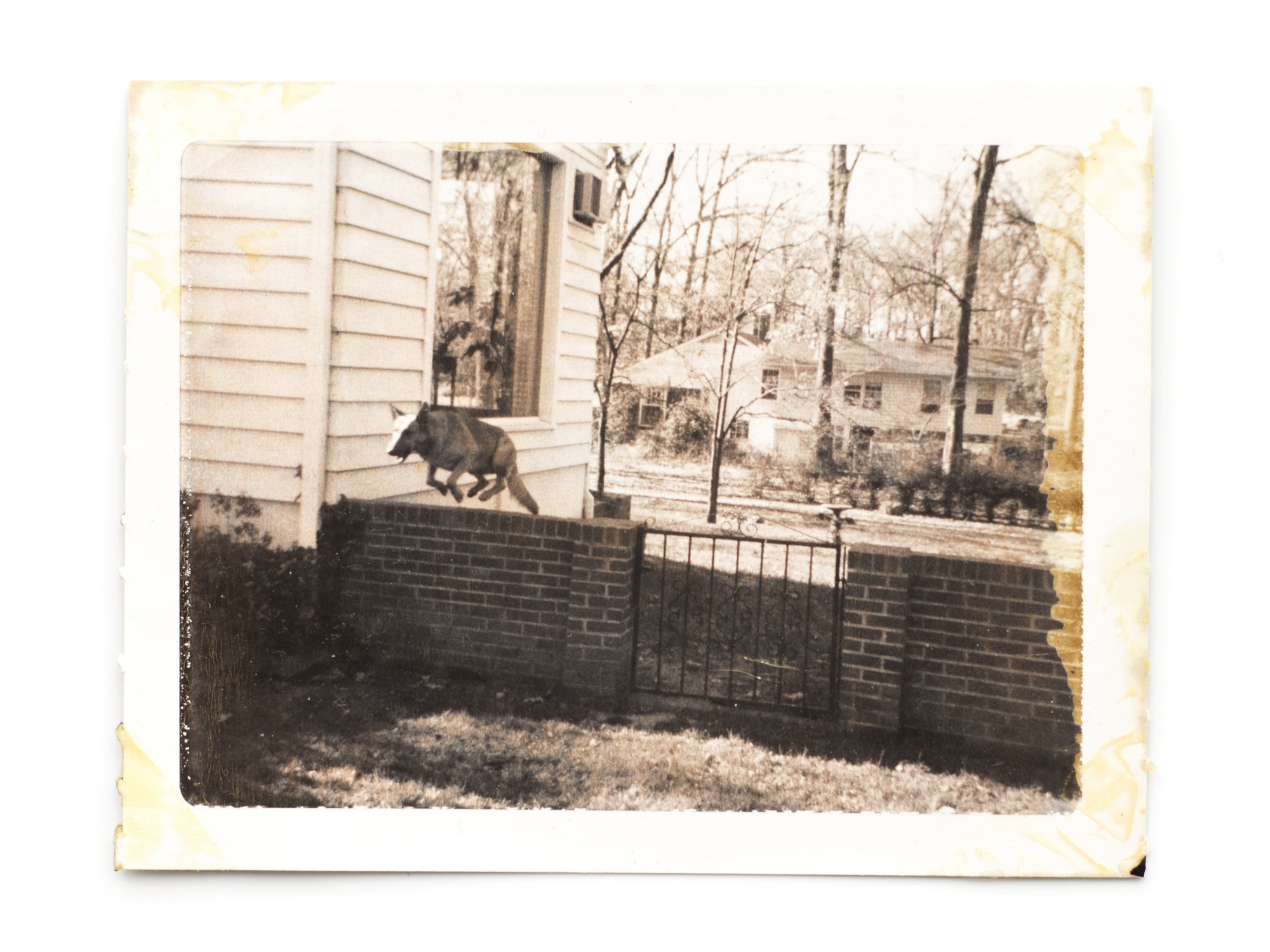 """Mike jumping  1960s / 2015 Vintage print 2x2.25"""""""