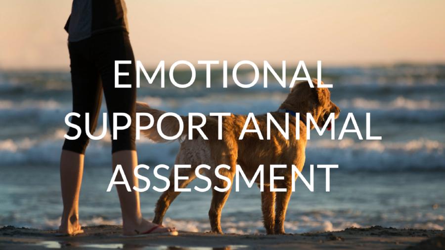 Emotional Support Animal Assessment