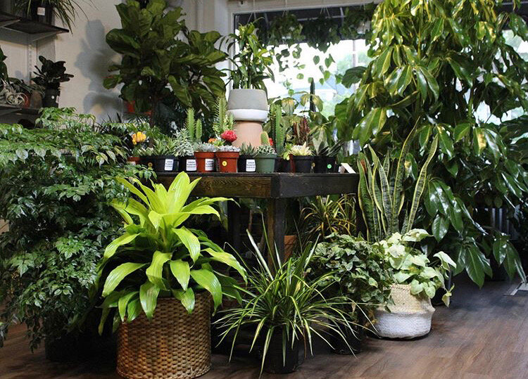 Urban Planting Cleveland supplies high quality tropical foliage, plants, and custom moss creations— for everyone!