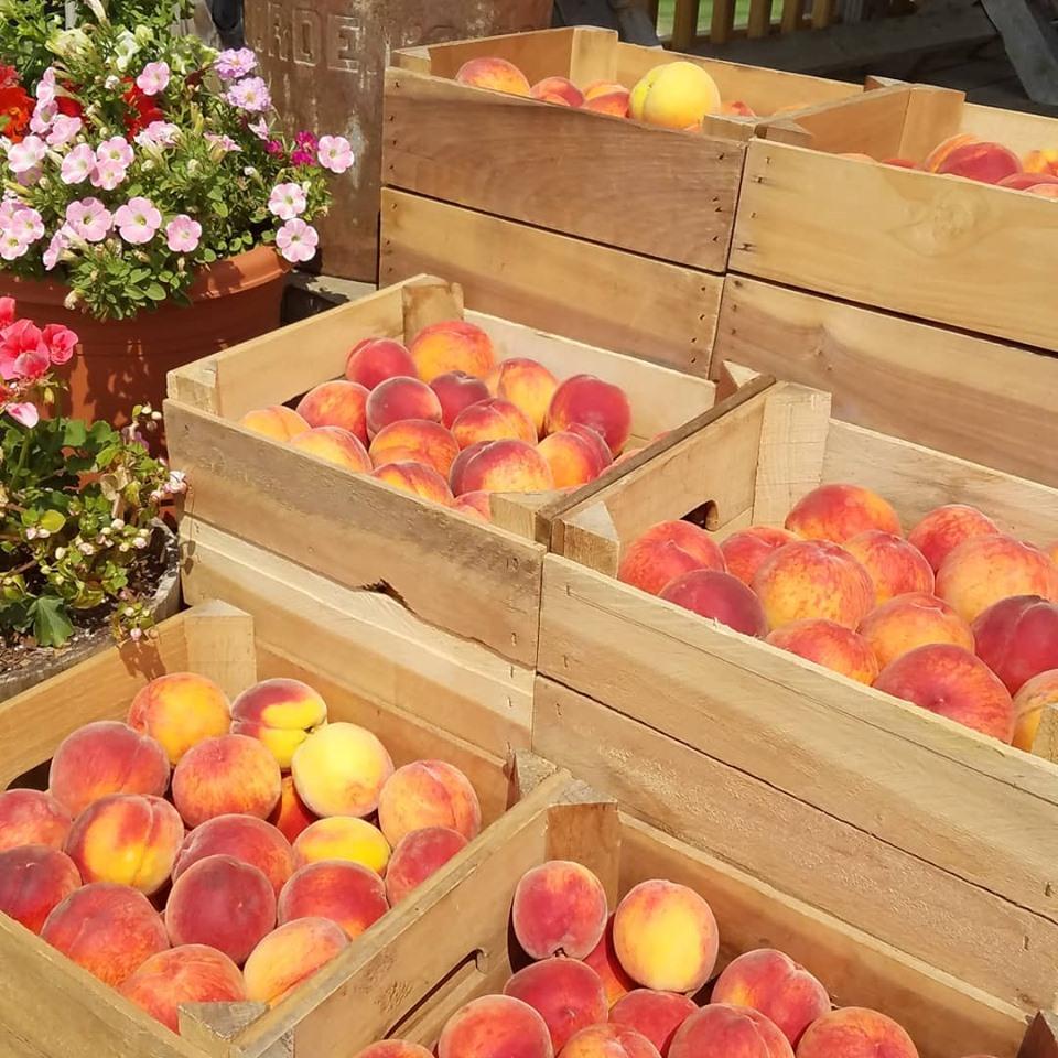 peach 2019.jpg