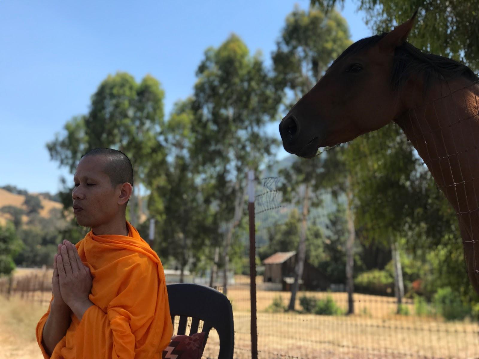 Monks Take a Chance Ranch.jpg