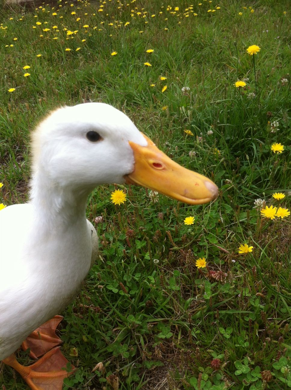 Lucky Duck. Very cheeky. Very bossy.
