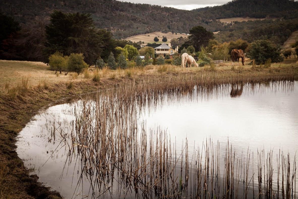 Our big pond.