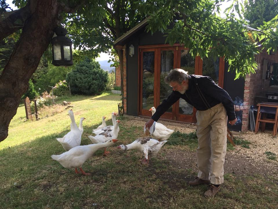 Feeding our family of geese at the Farm Shack