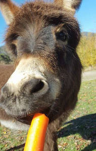 Coco loves carrots!