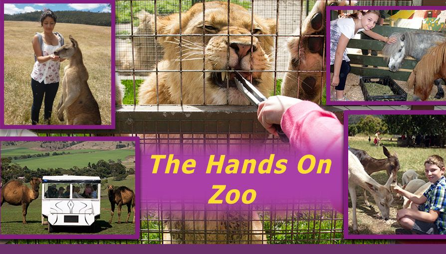 Zoodoo Zoo - Native and exotic animals