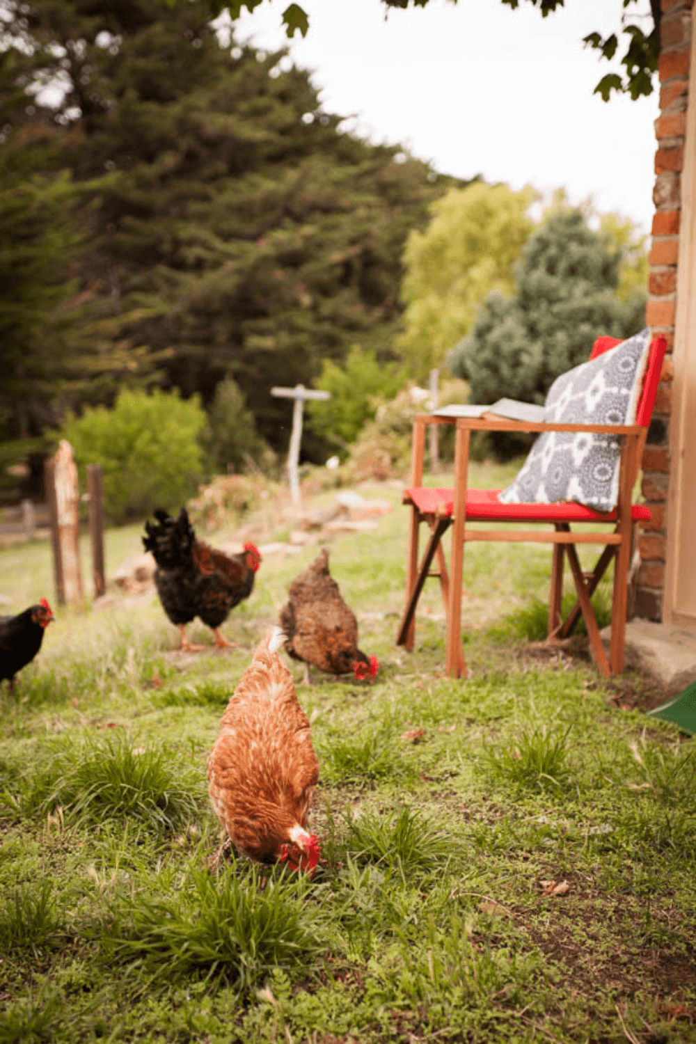 Chickens | Farm Stay | Boutique Accommodation | Tasmania