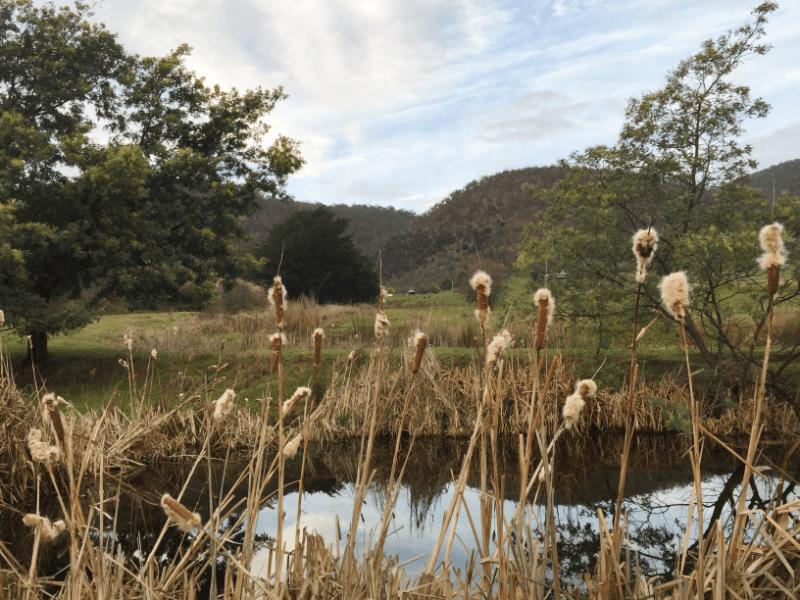 New Norfolk Farm Stay  | Hobart Accommodation | Tasmania