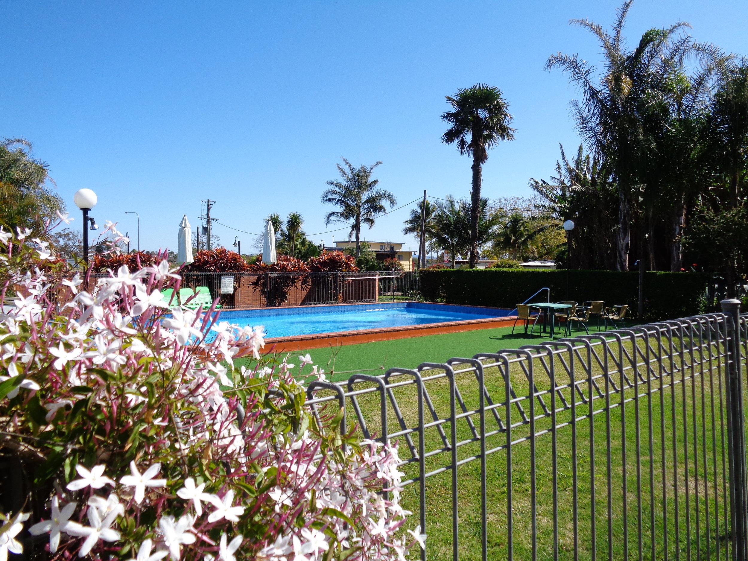 pool flowers.JPG