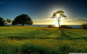 treegrass.jpg