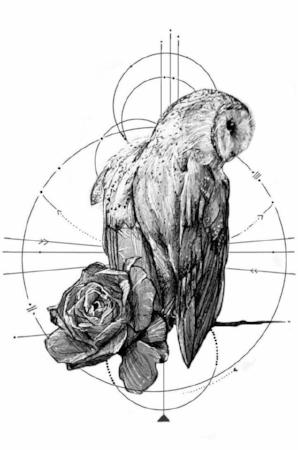 owly.jpg