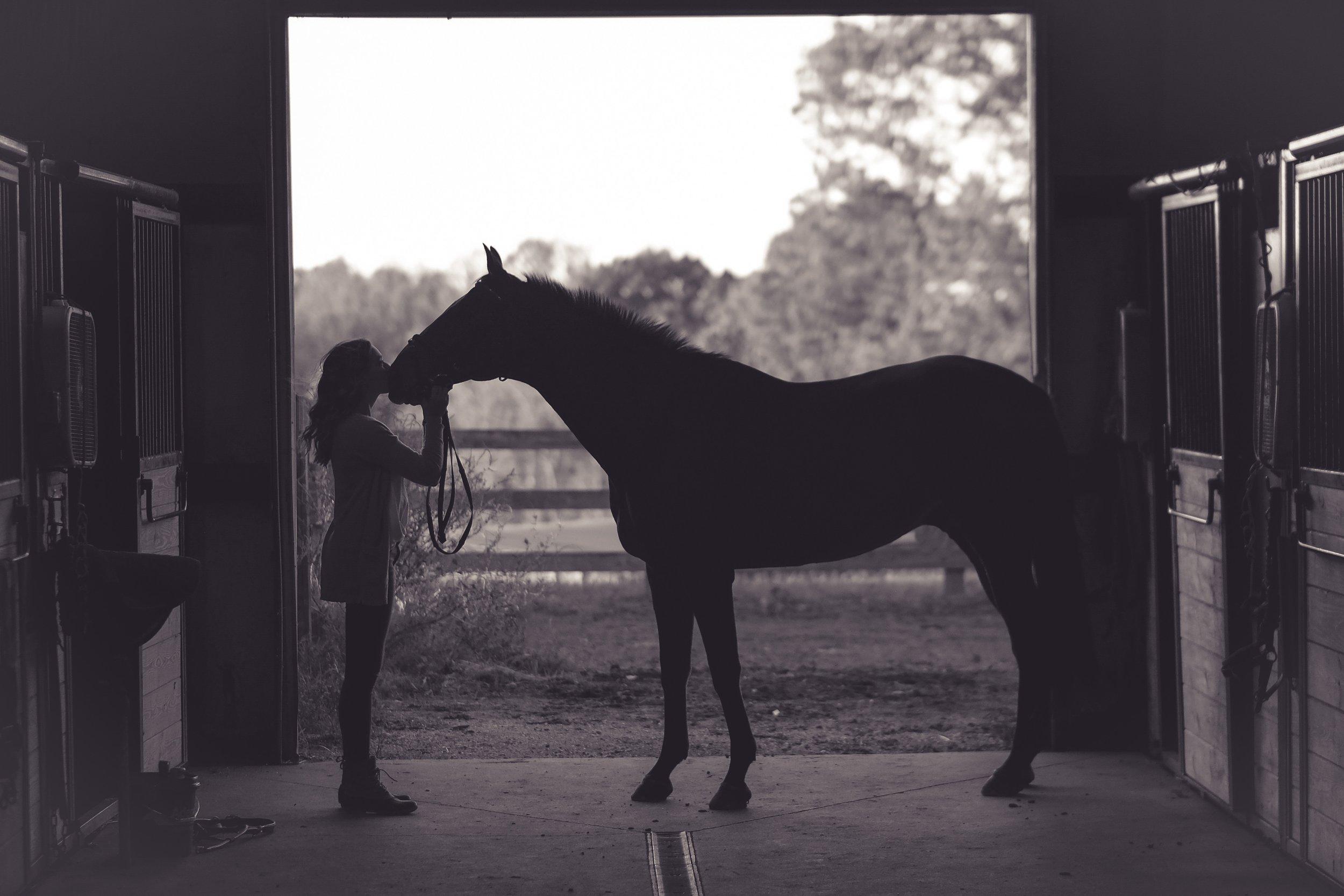 Horse Boarding -