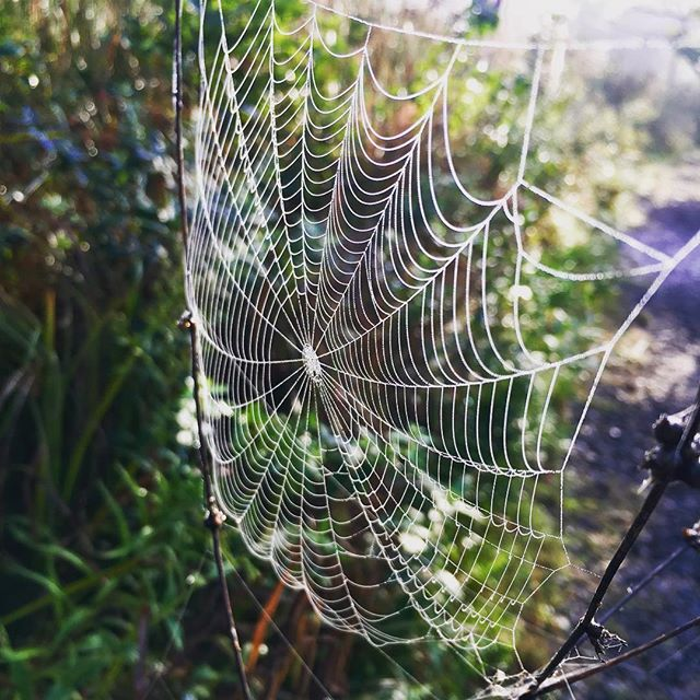 Nature walks in the morning are the perfect time to find spider webs, the dew makes them sparkle 💦 #outdooreducation #handsonlearning #naturewalk #forestschool