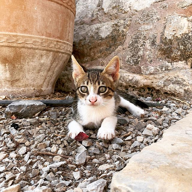 I may be turning into a cat person as well. Chance would flip! But these little kittens everywhere are too dang cute. #greece #catlady #kittens #arkadimonastery #crete #travel #animals #lovekittens #lovecats #wildkittens #funnykitten #goexplore