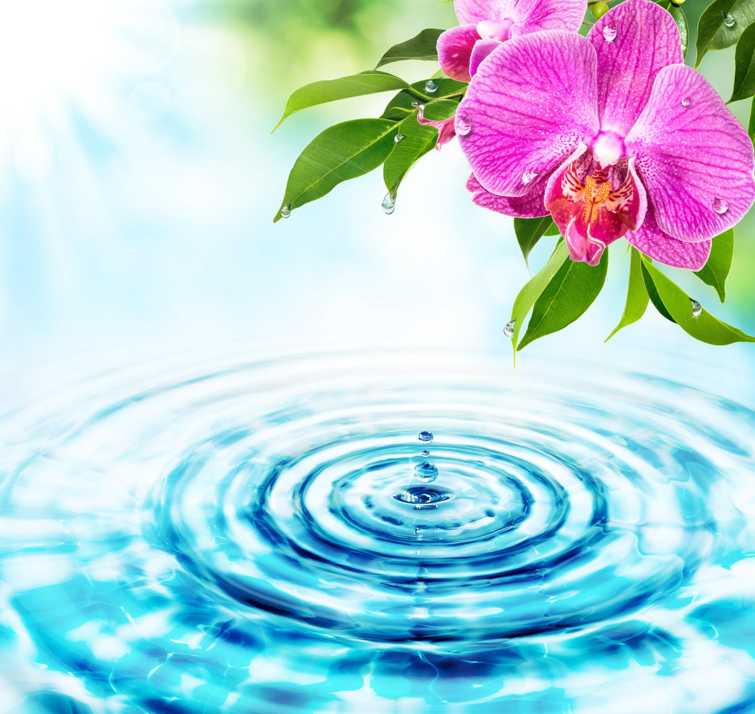 Lotus Blossom Leading ovarian regeneration using Platelet Rich Plasma and Enriched Platelet Factors