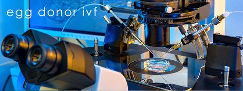 Gen-5-Fertility-Infertility-Treatment-egg-donor-ivf.jpg
