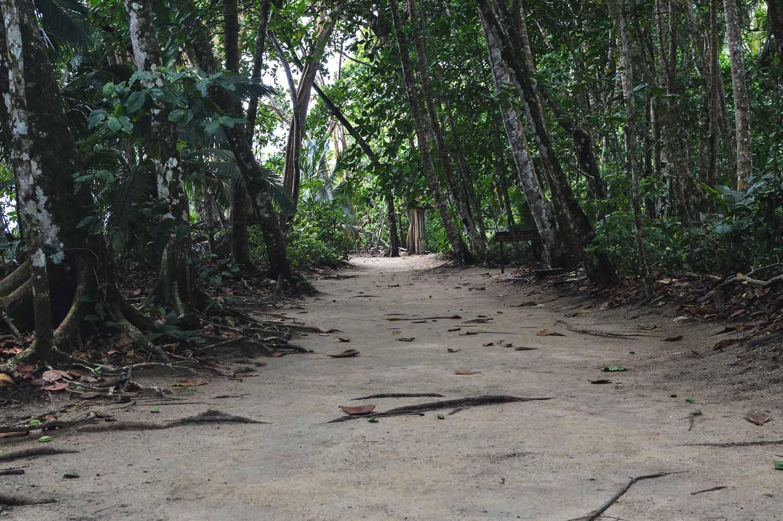 08-cahuita-national-park-costa-rica.jpg