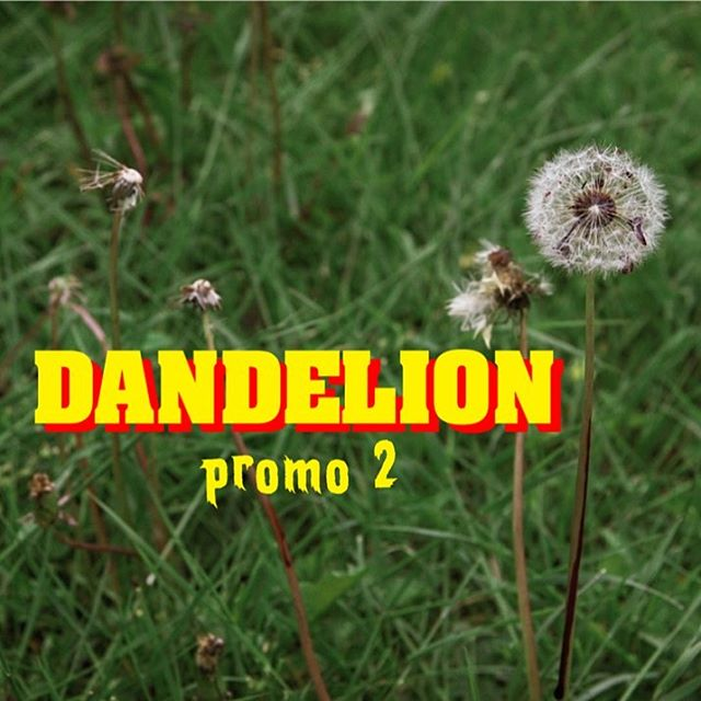 Check out my video page for my latest film work. Both Dandelion promos and a few shorts are up there. www.BenRigney.com/video, Link in bio