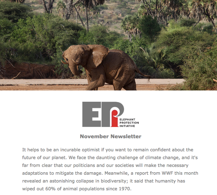 EPI Newsletter: Nov 2018 - A look at the success of the EPI Consultative Group meeting at the Illegal Wildlife Trade Conference in London and the hope this can give for elephants.