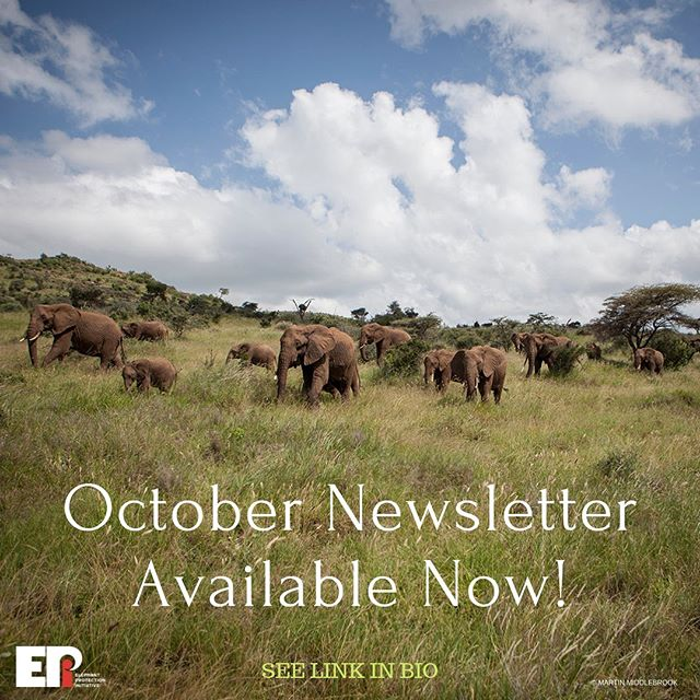Just when we thought we'd won... a threat to the UK Ivory Act, and John Scanlon of African Parks (and former Sec Gen of CITES) on how to heal the African divisions over ivory. All in the latest EPI monthly newsletter! . SEE LINK IN BIO . #conservation #elephantprotection #ivory #endwildlifecrime #angola #CITES #wildlife #elephants @johnescanlon