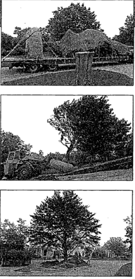 tree moving.png