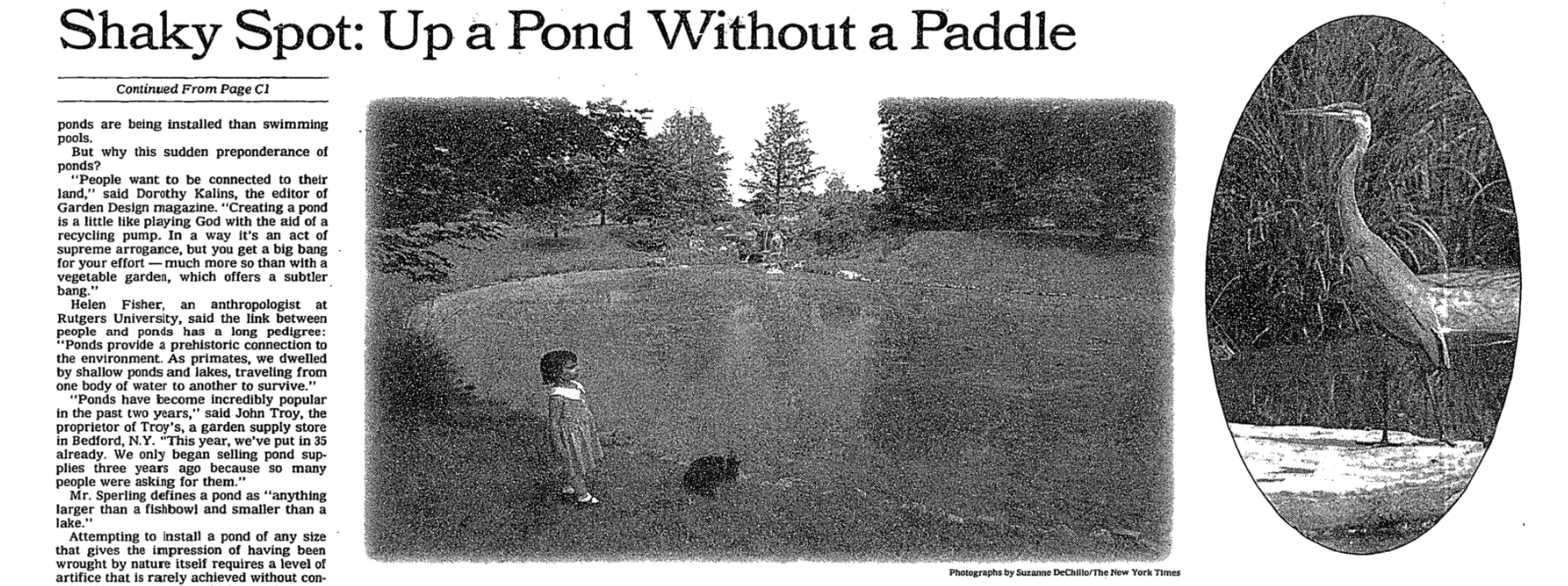Pond 2.png