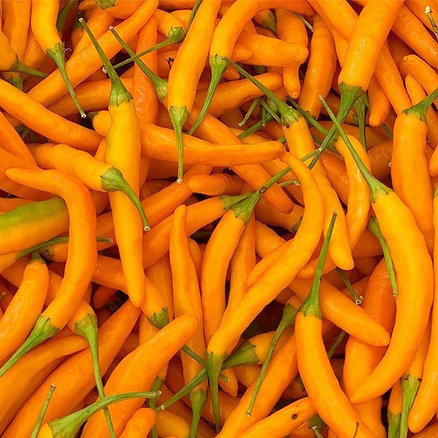Thai me up, Thai me down. Orange 🍊 #thai #chili at @unsqgreenmarket #bizarreobsessionwithorange🍊 #christo4masonphotography📸