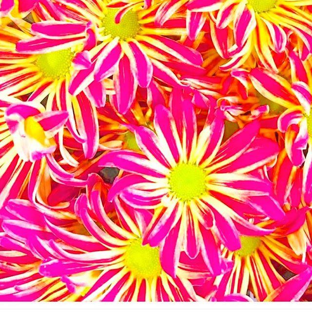 Morning on Manhattan #sayitwithflowers ##unionsquaregreenmarket #pink #bizarreobsessionwithorange🍊 #christo4masonphotography📸