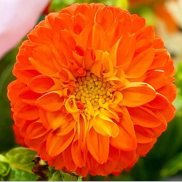 Hello Gorgeous! #orange #bizarreobsessionwithorange🍊 #christo4masonphotography📸