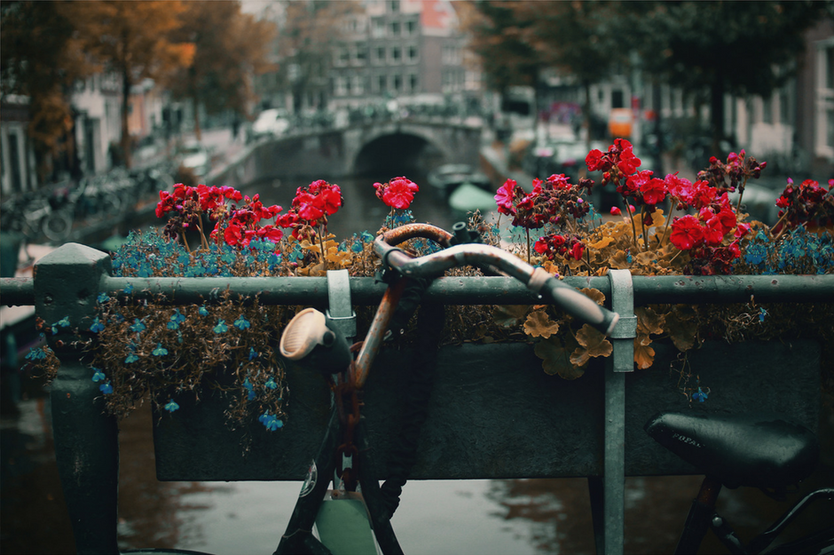 flowers on the bridge.png