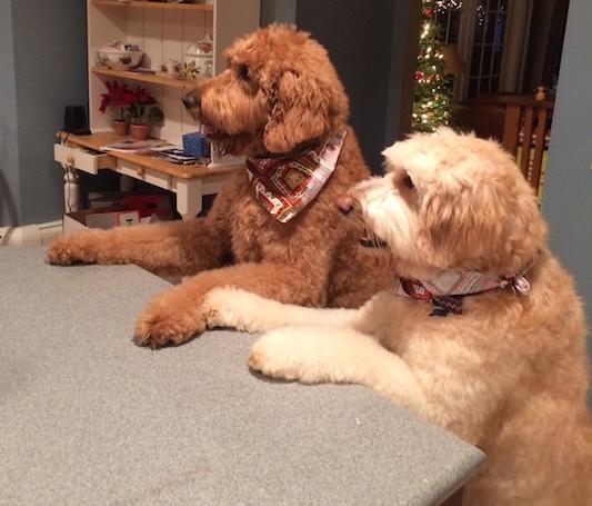 Max & Bella -