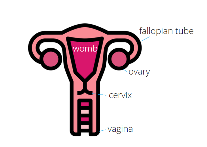 Ovarian Cancer Risk Management Www Cancergenetics Ie