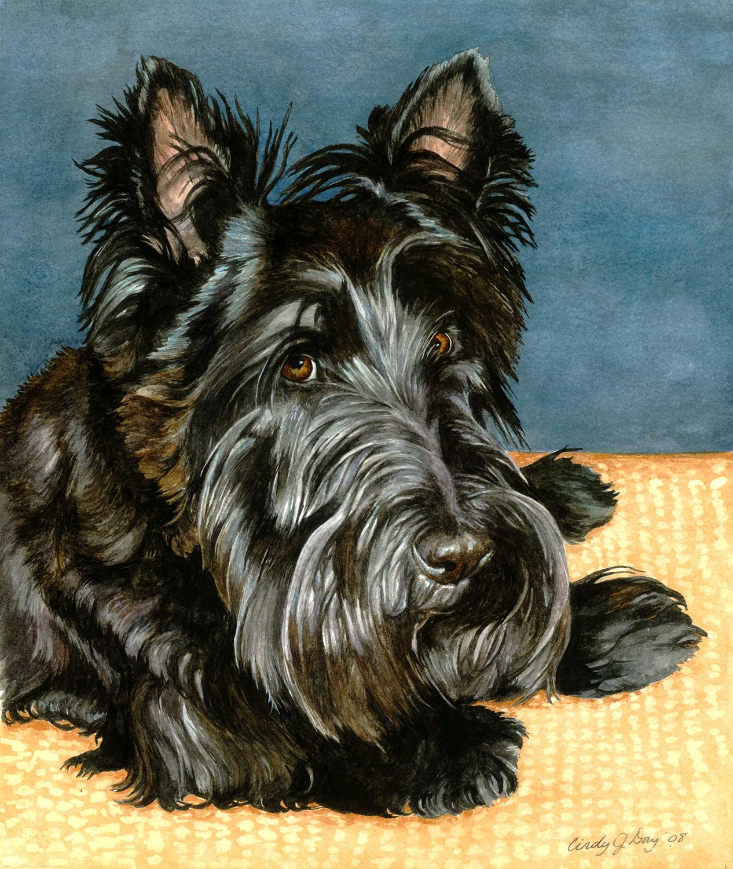 Bailey 8 x 10 Watercolor