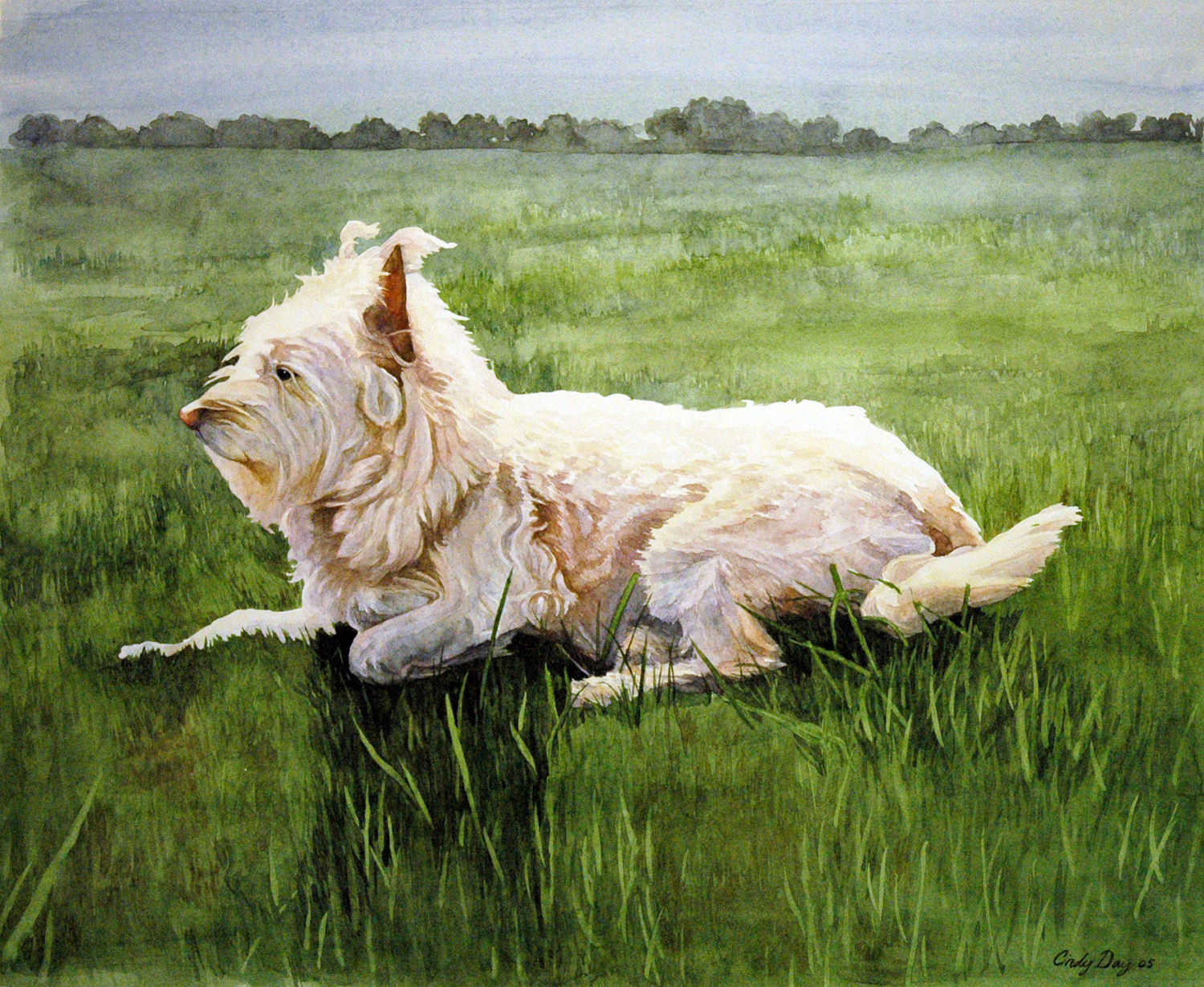 West Highland Terrier - 8 x 10 Watercolor