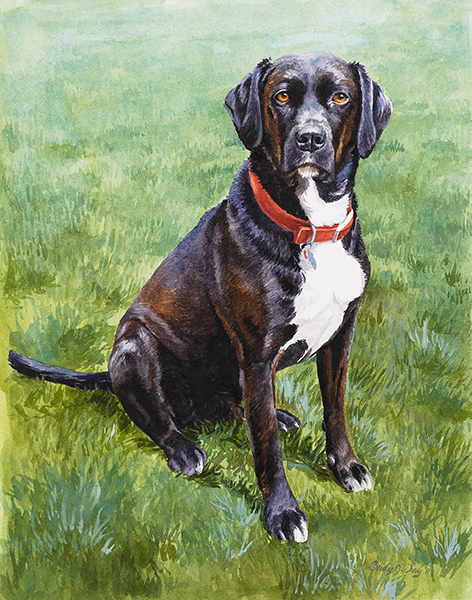 Black Lab Red Collar - 5 x7 Watercolor