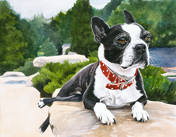 French Bulldog - 8 x 10 Watercolor